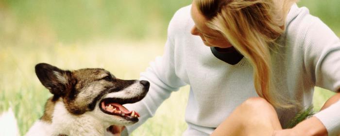 Dog Food Secrets Cover