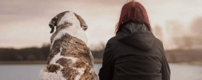 Doggy Dan's Online Dog Trainer Discount