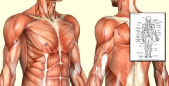 Human Anatomy & Physiology Course Discount