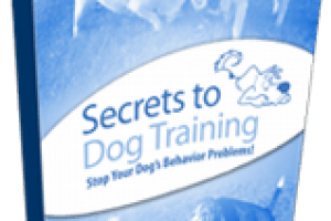 Secrets To Dog Training