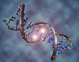 Menopause Gene
