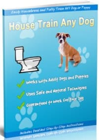 House Train Any Dog