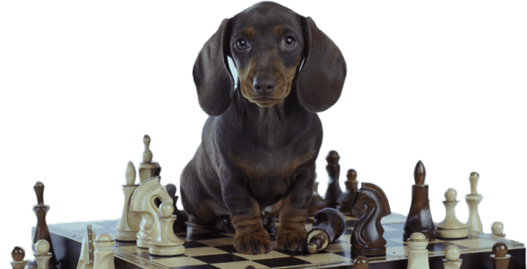 Brain Training for Dogs Discount